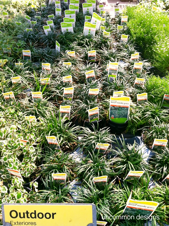 Home-depot-ground-cover-choices