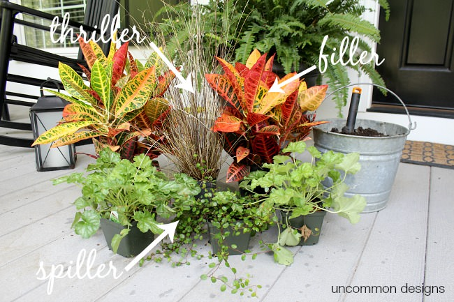 Window box planting 101. Thriller-Filler-Spiller