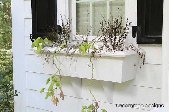 Fall window box spruce up
