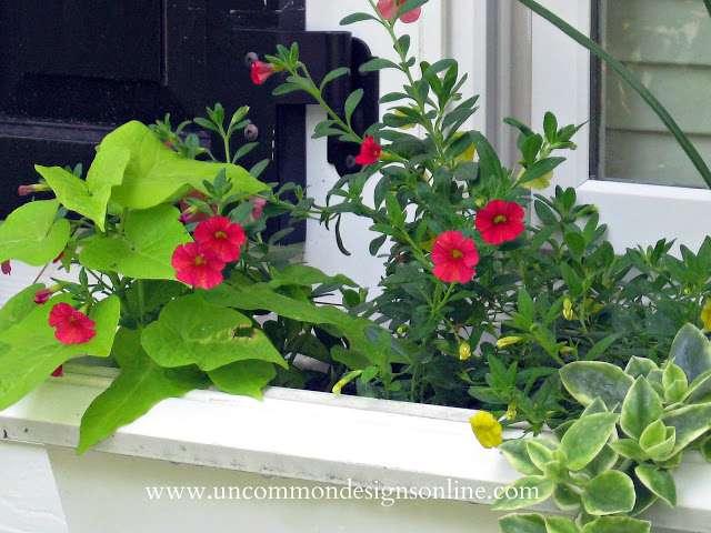 summer-window-box-uncommon-designs